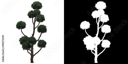 Front view of tree (Boulevard Cypress) png with alpha channel to cutout 3D rende Fototapeta