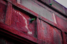 Old Door With Red Paint Parrot