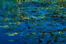Blue Green Water Lilies, Monet Style