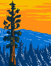 WPA Poster Art Of The Boole Tree A Giant Sequoia In Converse Basin Grove Of Giant Sequoia National Monument In Sierra Nevada, Fresno County, California USA Done In Works Project Administration Style.