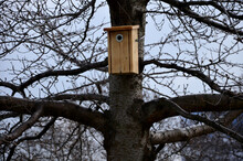 Installation And Inspection Of Birdhouses On Trees For Spring Nesting. Wooden Booth For A Tit Made Of Natural Fire Tanned Wood On A Tree. The Hole Points To A Place Where There Are Few Branches
