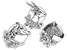 Antelope Zebra Giraffe Head Animal Sketch Raster