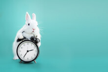 White Bunny With Clock On Blue Flowers