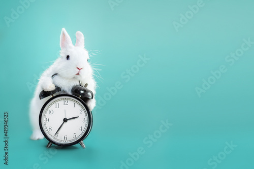 Obraz White bunny with clock on blue flowers - fototapety do salonu