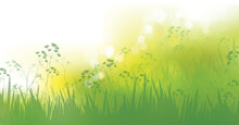 Vector Green Grass, Nature Background. Spring  Bokeh Background.