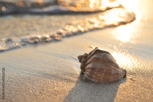 Canvas Print Big seashell in sea on the beach.