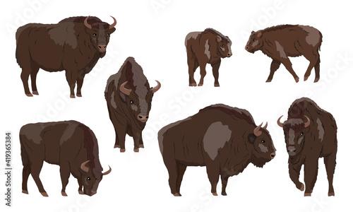 European bison Bison bonasus set Fotobehang