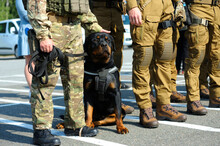 Soldiers Of KORD (police Special Forces), And Police Dog Rottweiler Standing In The Line On The Ground