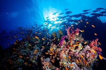 Fototapeta na wymiar Sinai Reef