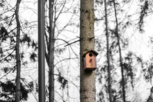 Defocus Wooden Orange Birdhouse On A Trunk Of A Tree In The Park On Black And White Background. Bird Feeder. Copy Space. The Birdhouse Is Waiting For The Arrival Of Migratory Birds. Out Of Focus