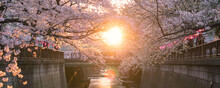 Cherry Blossoms At Sunset In Meguro River, Tokyo 東京 目黒川の桜と夕日