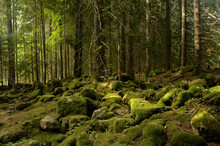 Moss Covered Rocks In A Forest Landscape, Bulgaria