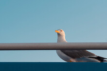 Seagull Resting On The Deck Of A Ship