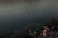 From Above Scenery View Of Wavy Water Near Blossoming Flowers And Green Plants In Twilight