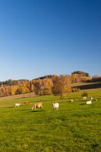 Typical Sumava Autumn Landscape, Southern Bohemia, Czech Republic