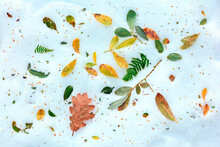 Top View Of Colorful Fallen Leaves Scattered On Snowy Ground In Nature In Winter