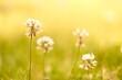 canvas print picture - Blumenwiese gelb touch