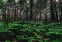 Abundant Thick Forest With Tall Green Trees And Lush Verdant Fern Bushes On Clear Summer Day