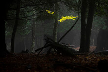 Mysterious View Of Thick Deciduous Woodland With Fallen Yellow Leaves And Dry Trunks At Dark Night
