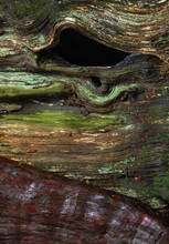 Dry Mossy Bark Of Old Decaying Tree With Hole In Forest In Daylight