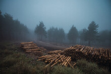 Scenic View Of Heap Of Timber On Grass Against Trees Under Misty Sky In Twilight