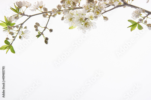 almond flower at the top in back ground white with copy space for text Fototapet
