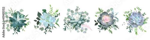 Fototapeta Green colorful succulent bouquets vector design objects obraz