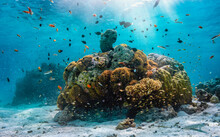 A Colorful Underwater Reef With Vibrant, Tropical Fish In The Maldives, Indian Ocean