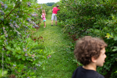 Photo Young family picking blueberries in the summertime