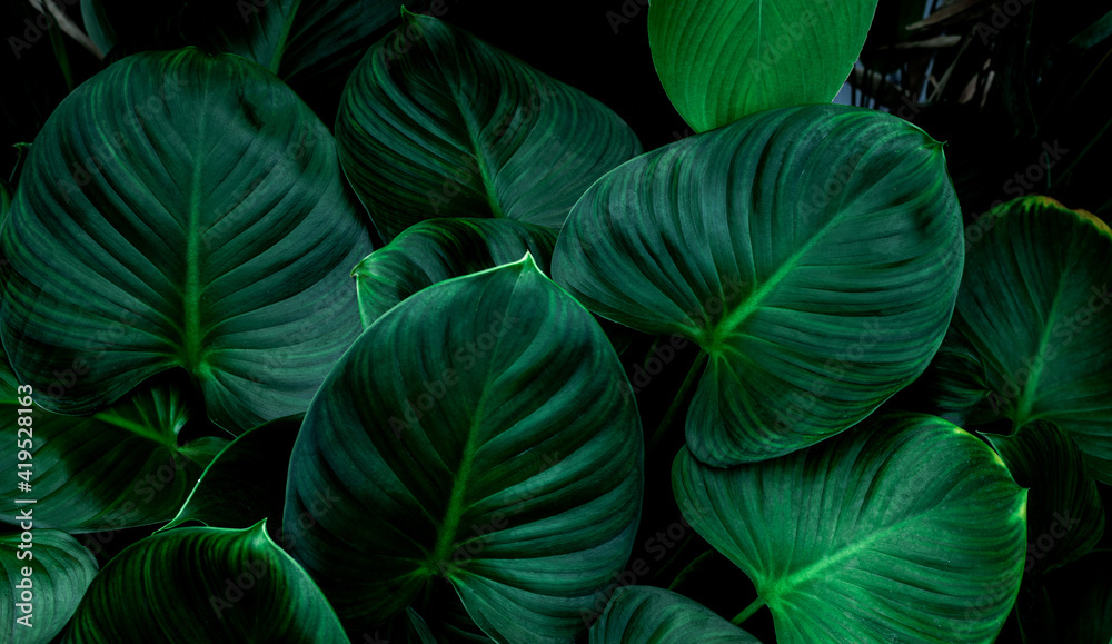 Fototapeta Full Frame of Green Leaves Texture Background. tropical leaf