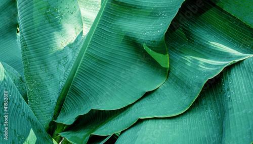 Photo abstract banana leaf texture, dark green foliage nature background, tropical lea