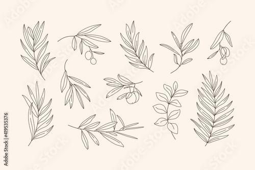 Obraz na płótnie Set of Leaves and Branch