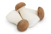 King Oyster Mushroom Or Eringi Isolated On White Background With Clipping Path And Full Depth Of Field.