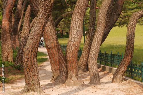 Obraz drzewa - fototapety do salonu