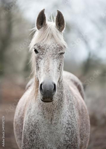 Tablou Canvas white horse