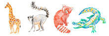 Set Of Illustrations With Crocodile,giraffe,lemur,red Panda Drawn With Wax Crayons.Clip Art With Animals On White Isolated Background  With Pastel Pencils.Design For Social Networks,posters.