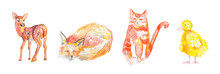 Set Of Illustrations With Fox,cat,duck Drawn With Wax Crayons.Clip Art With Animals On White Isolated Background  With Pastel Pencils.Design For Social Networks,posters,cards.