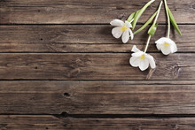 White Tulips On Old Dark Wooden Background