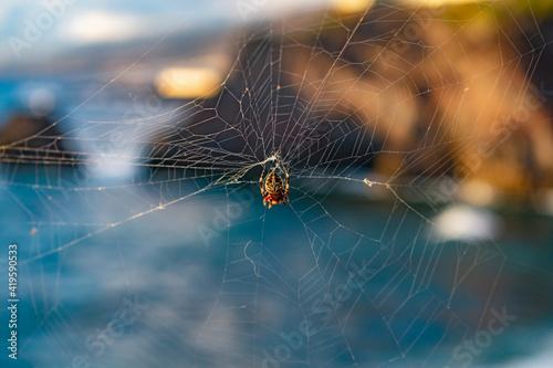 Foto Araña colgada con un paisaje de mar de fondo.
