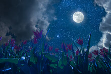 Full Moon And Tulips