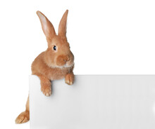 Cute Bunny Isolated On White. Easter Symbol