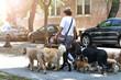 Leinwandbild Motiv a young man with dogs in the street