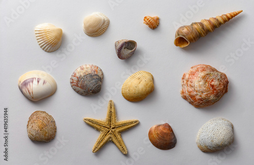 Seashells of various shapes and types. Background. Fototapete