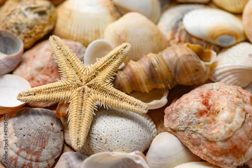 Fotografiet Seashells of various shapes and types. Background.