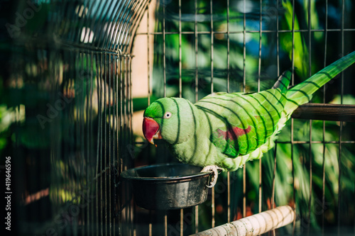 Canvastavla Bright green parrot with red beak sitting in cage against the backdrop of green trees or tropical garden
