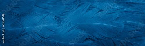 Obraz na plátně macro photo of blue hen feathers. background or textura