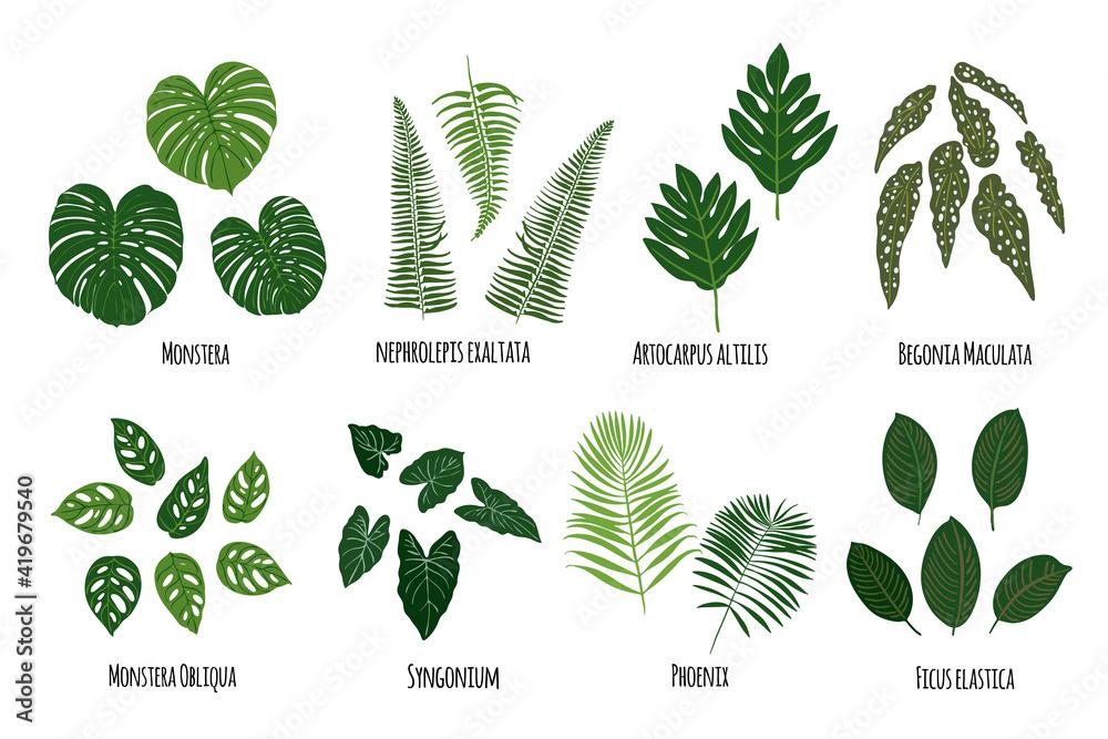 Fototapeta Leaves of tropical plants on a white background. Green jungle. Monstera, nerhrolepis exaltata, artocarcus altilis, begonia maculata, ficus, phoenix