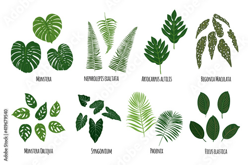 Fotografie, Obraz Leaves of tropical plants on a white background