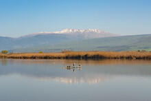 Agmon Hahula Nature Reserve With Mount Hermon - Hula Lake Reflection In The Galilee , Israel