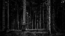 Forêt D'hiver - France